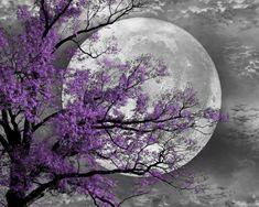 Black and White Purple Tree Moon Wall Art by LittlePiePhotoArt,
