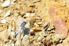 Dragonfly next to the dam Wood, Crafts, Manualidades, Woodwind Instrument, Timber Wood, Trees, Handmade Crafts, Craft, Arts And Crafts