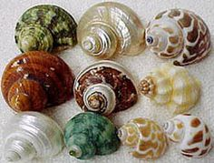 Shell Assortments and Collections