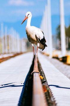 Single White Stork. by Vehbi KILIÇ on 500px