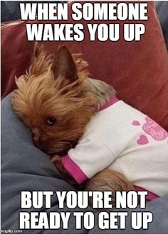 Image tagged in tryna sleep Cute Funny Animals, Cute Baby Animals, Funny Cute, Super Cute Puppies, Cute Dogs, Funny Instagram Memes, Dog Gadgets, Dog Quotes Love, Sleepy Dogs