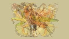 絵から真っ先にどの動物が見えるかをもとに性格を診断する「Meaww」のテスト。 直感を信じること、そして辛抱強さをマスターしている「カマキリ」 でした。