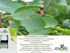 Aceite esencial de Eucalipto.   Eucalyptus essential oil.