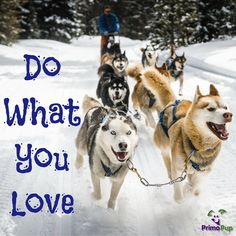 Be Happy - Do What You Love! www.primopup.com