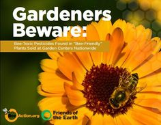How You Can Help Save the Bees - Groovy Green Livin