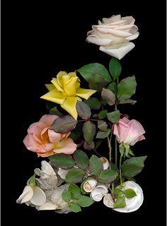 Shells and Roses 1 - Scanner Photography By Ellen Hoverkamp