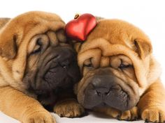 4 Valentine's Day Puppy Love Shar Pei Dog Dogs Puppies Heart Love Candy Greeting Notecards/