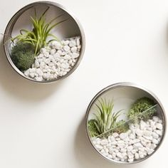 Stacy's Favorite DIY Wall Garden Favors | Looksi Square
