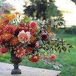 IMG_0824 by Erin Benzakein / Floret Flower Farm