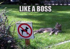 Funny Cat Memes - Page 5 - Cat Forum : Cat Discussion Forums