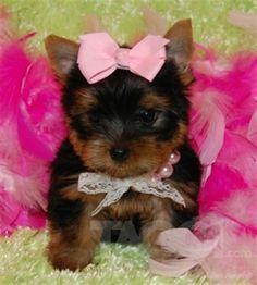 schattig hondje