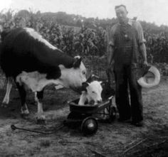 """Homestead Skills from Days Gone By ... """"Living on a Self-Sustaining Farm in Mid-20th Century Virginia"""""""