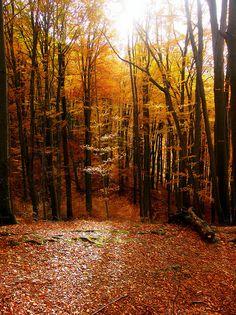Park prirode Papuk - Jankovac, Croatia