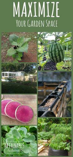 74 Best Evergreen Trees Shrubs Images Gardens Garden Shrubs