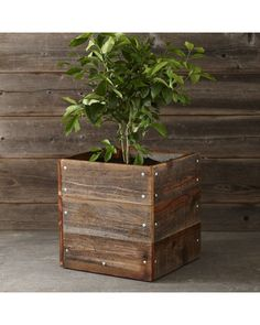 Williams-Sonoma Reclaimed Square Planter from Williams-Sonoma | BHG.com Shop