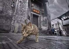 A cat in an old Chinese town  (Source: @摄影约拍)