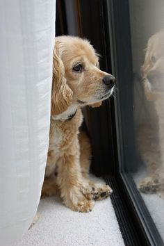This is what Barney does all day! Looking out the window waiting for us to come home....