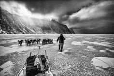 An Inuit hunter runs with his dog team of huskies across the sea ice in Northwest Greenland. They are true masters of their domain. Their survival depends on their intimate connection and knowledge of this icy realm. It is fascinating to hear about the changing ice and climate through their experiences as they live and breath it everyday. If you go back to the days of Robert Peary and Franklin before that the Arctic crushed their ships in thick pack ice all year round. Now the hunters have…