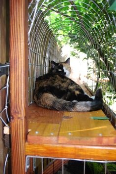 DIY outdoor cat enclosures - I want to do this for my beautiful cat so bad!!