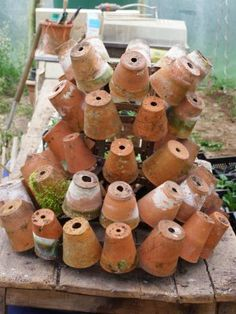 small terra-cotta pots on a glass dryer rack - yes! I have the rack and some french pots. start collecting more.