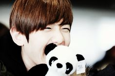 Baekhyun With Cute Panda Doll HD Wallpaper