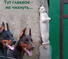 Фотоприколы дня! / Приколы