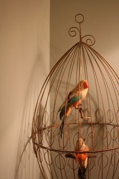 Bird Cage and birds Antique Bird Cages, The Caged Bird Sings, Wire Art, Bird Feathers, Beautiful Birds, Bird Houses, Plant Hanger, Pet Birds, Decoration