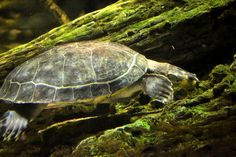 buzzfeed giant turtles - Bing Images