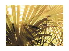 Green Palms by Simi Gauba for Minted