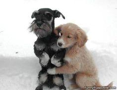 Hello, here's a hug
