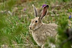 Jack rabbit in the green Jack Rabbit, Wildlife, Quilts, Green, Animals, Animales, Comforters, Animaux, Patch Quilt
