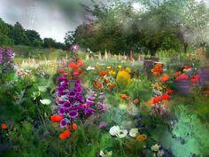 O poiană cu flori multe
