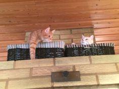 Kolme kissaa, kaksi  koppaa. No place but just for us