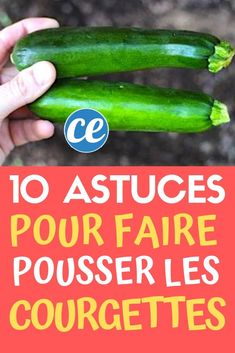 Découvrez les 10 astuces secrètes de maraîcher pour faire pousser de belles courgettes.