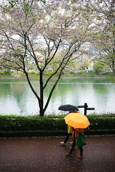 Rainy Seokchon Lake Park by Seoul. Cities In Korea, Korean Peninsula, South Korea Travel, Lake Park, Seoul Korea, Culture Travel, Vacation Spots, Travel Around, Beautiful Places