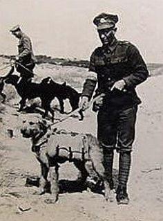 War Dogs: