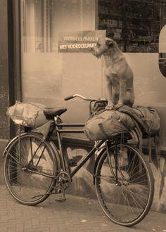 Two loyal friends.  #Dog on #Bike - Netherlands