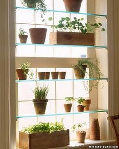 Interior wall garden shelves design by Martha Stewart. Beautiful way to grow more window plants in your home.