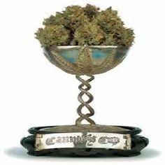 Cannabis Cup, Amsterdam Netherlands
