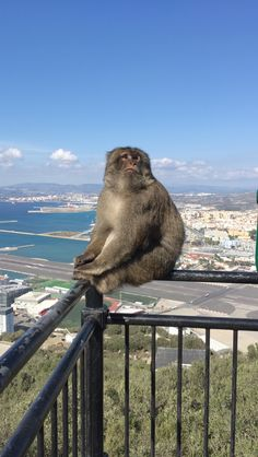 See 367 photos and 15 tips from 2958 visitors to Rock of Gibraltar Rock Of Gibraltar, Monkey Business, The Rock, Photography, Animals, Photograph, Animales, Animaux, Fotografie