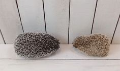 This Tiny Hedgehog Doesn't Understand Why The Pine Cones Aren't Playing Back
