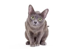 crouching cat - Google Search