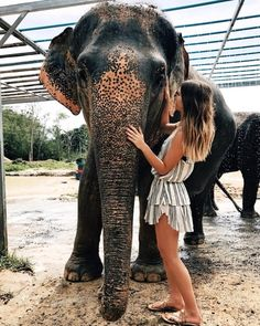 he moment my heart exploded OMG what a joy to spend time at an Elephant Rescue camp in Thailand and to be able to feed and bathe these incredible animals if you are able to visit Thailand or Africa, I 100% recommend finding a way to see them BUT it is so important to find a place that is providing a safe environment for the elephants where they are unchained, free to roam and free from being poked and prodded into preforming tricks for tourism. Do your research, I promise it's worth it! ✨…