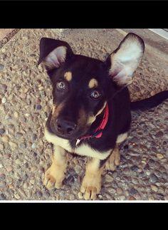 Puppy Love❤️