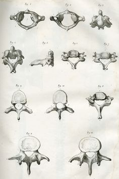 Vertebres   by Center for Image in Science and Art _ UL