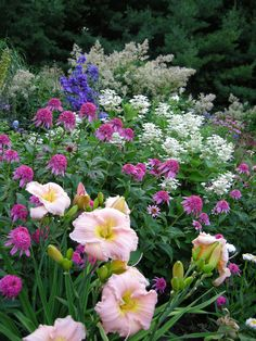 Barbara Mitchell daylily, Echinacea Razzmatazz with Hydrangea Pinky Winky and Delphinium elatum Pagan Purples.