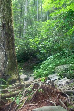 Take a hike through Gatlinburg's trails with your furry friend!