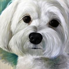 Maltese Painting - Peanut by Mary Sparrow