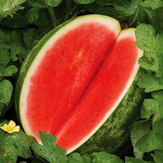 30ピースメロン種子種なしスイカ種子フルーツ植物品種新鮮な涼しい夏盆栽植物用ホームガーデンとして子供ギフト