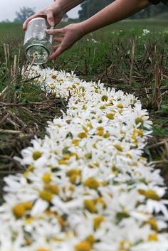 instead of a runner, line the aisles with daisies like this